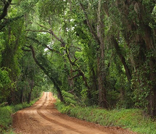 Dirt Road through a thick wooded area